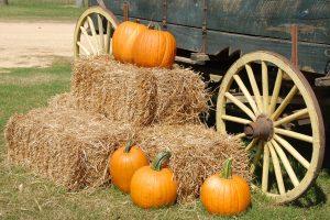 Dan zahvalnosti (Thanksgiving)